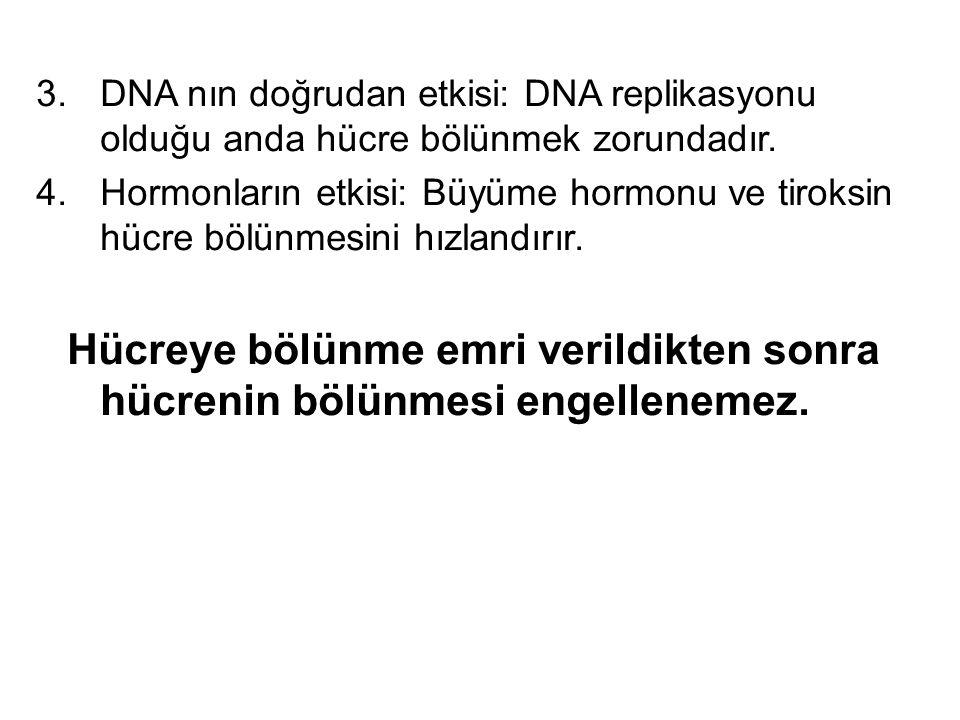 3.DNA nın doğrudan etkisi: DNA replikasyonu olduğu anda hücre bölünmek zorundadır. 4.Hormonların etkisi: Büyüme hormonu ve tiroksin hücre bölünmesini