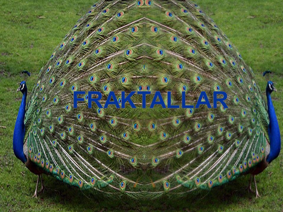 FRAKTALLA R