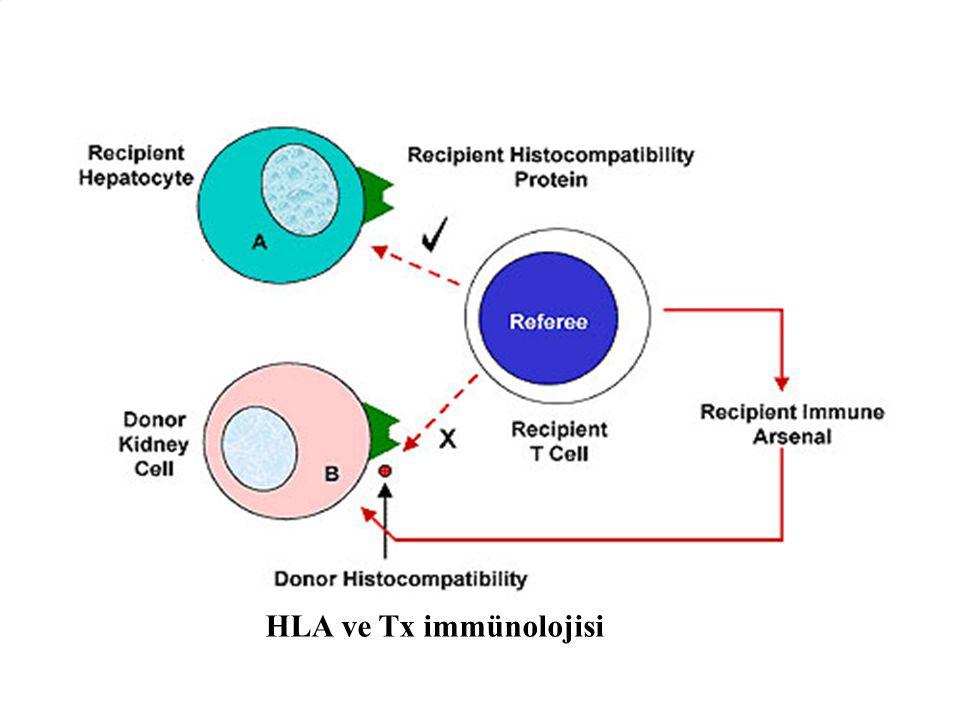HLA ve Tx immünolojisi