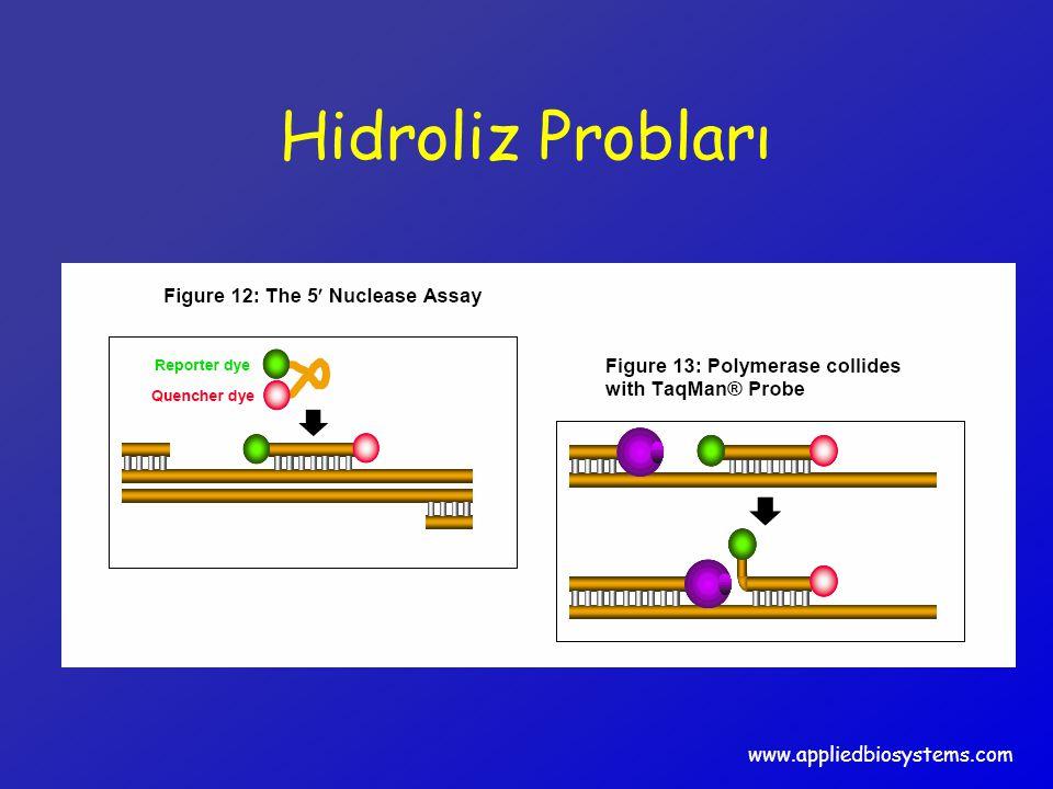 Hidroliz Probları www.appliedbiosystems.com