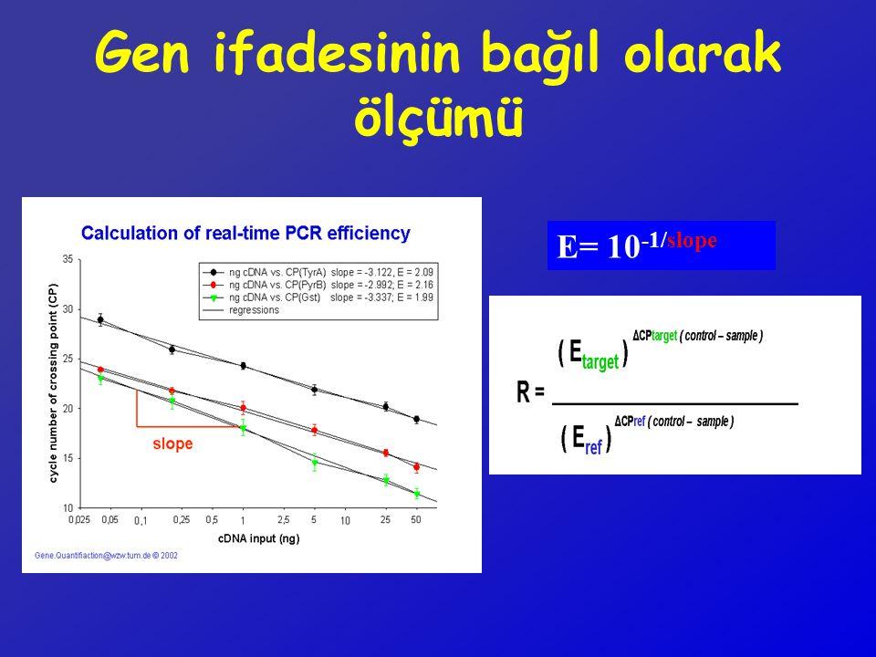 E= 10 -1/slope Gen ifadesinin bağıl olarak ölçümü