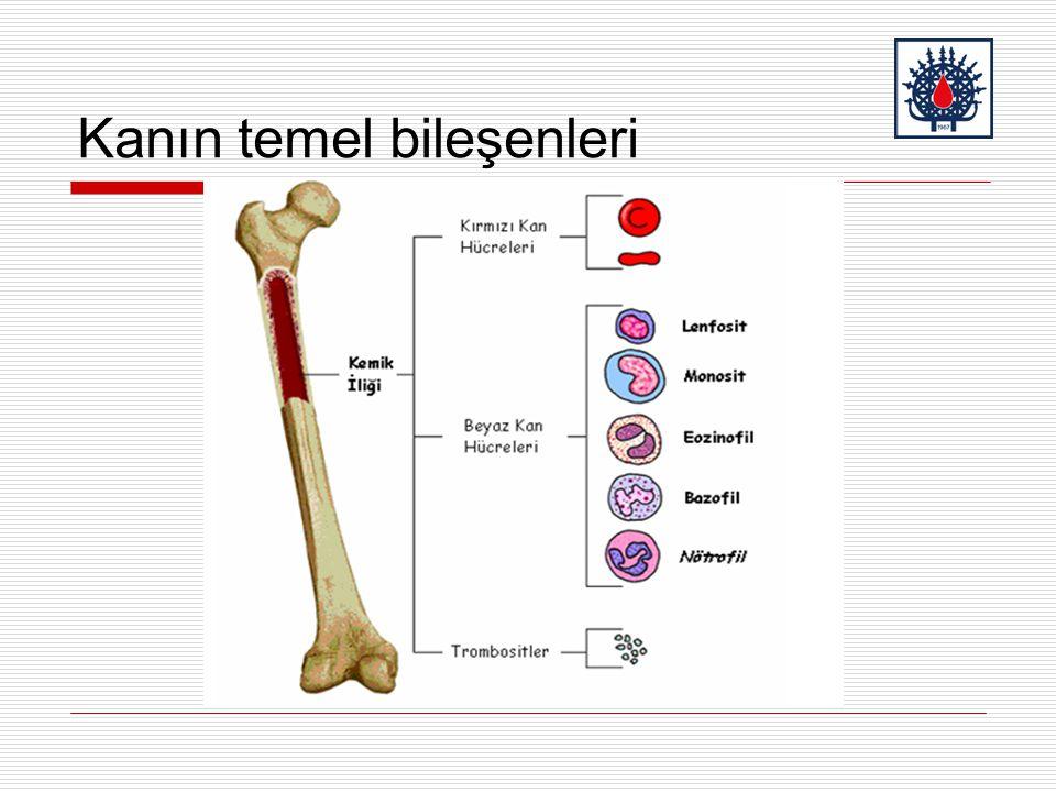 Kanın temel bileşenleri