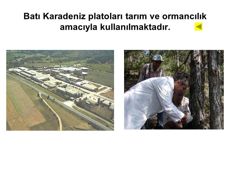 Batı Karadeniz platoları tarım ve ormancılık amacıyla kullanılmaktadır.