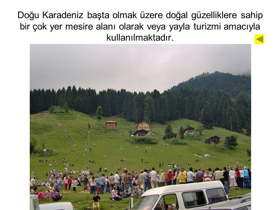 Doğu Karadeniz başta olmak üzere doğal güzelliklere sahip bir çok yer mesire alanı olarak veya yayla turizmi amacıyla kullanılmaktadır.