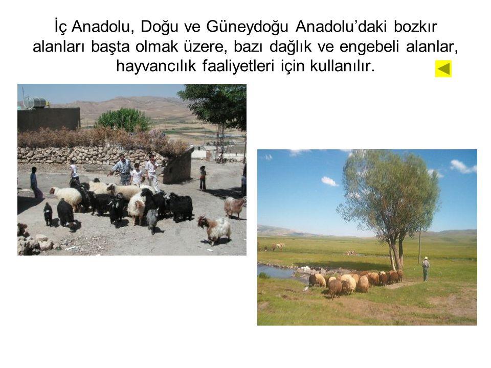 İç Anadolu, Doğu ve Güneydoğu Anadolu'daki bozkır alanları başta olmak üzere, bazı dağlık ve engebeli alanlar, hayvancılık faaliyetleri için kullanılı