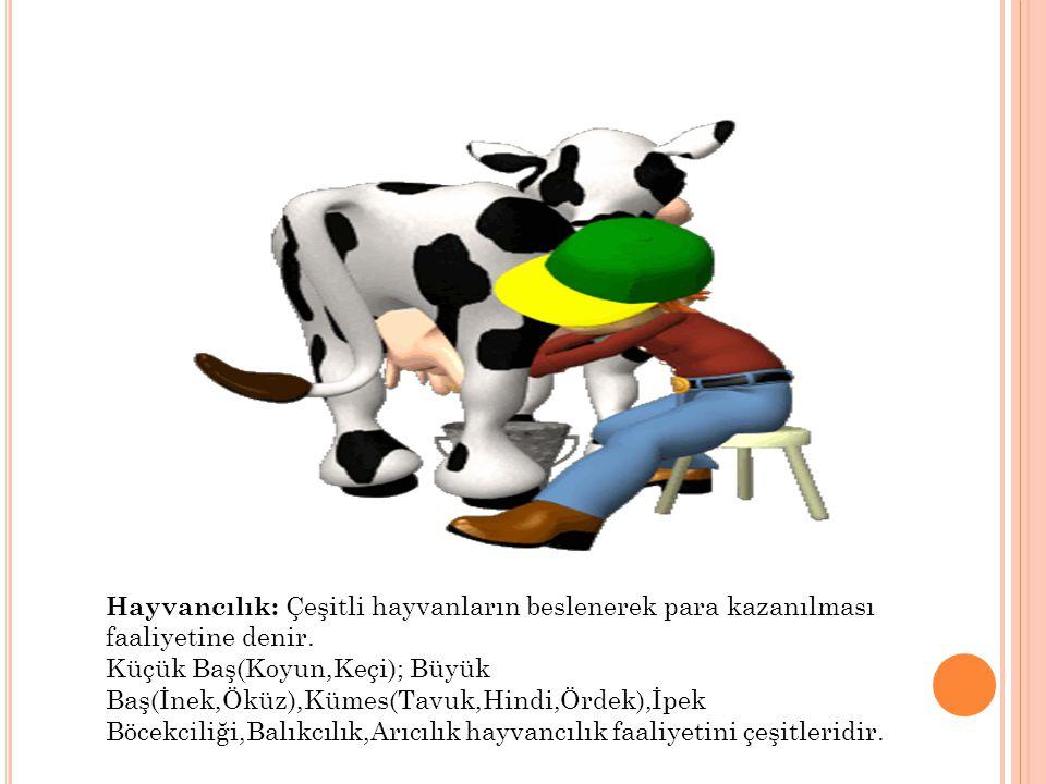 Hayvancılık: Çeşitli hayvanların beslenerek para kazanılması faaliyetine denir. Küçük Baş(Koyun,Keçi); Büyük Baş(İnek,Öküz),Kümes(Tavuk,Hindi,Ördek),İ