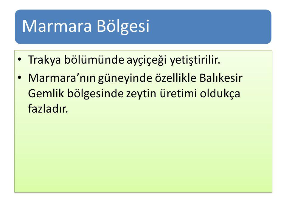 Marmara Bölgesi Trakya bölümünde ayçiçeği yetiştirilir. Marmara'nın güneyinde özellikle Balıkesir Gemlik bölgesinde zeytin üretimi oldukça fazladır. T