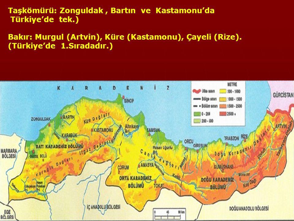 TARIM VE HAYVANCILIK Fındık: Ordu ve Giresun çevresinde.