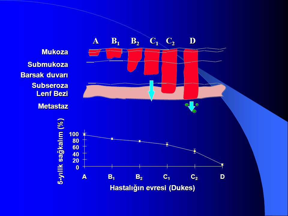 Mukoza Barsak duvarı Subseroza Lenf Bezi Metastaz Hastalığın evresi (Dukes) Submukoza 0 20 40 60 80 100 A B1B1B1B1 B2B2B2B2 C1C1C1C1 C2C2C2C2D 5-yıllk