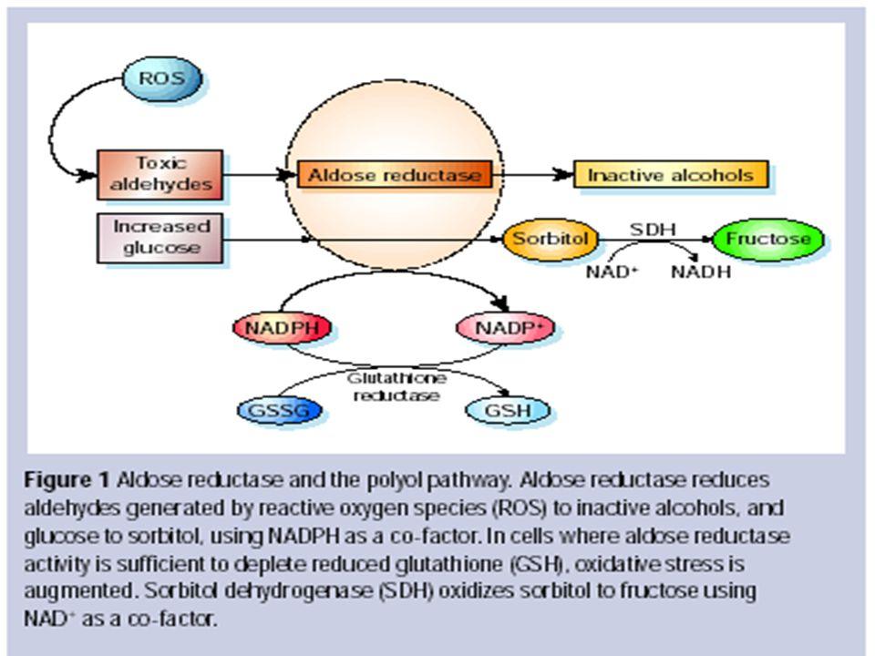 İLERİ GLİKOZİLASYON SON ÜRÜNLERİN OLUŞMASI(AGE) Hiperglisemi ile proteinlerin amino grubları nonenzimatik yolla bağlanması SCHİFF BAZ olusması Stabil amodori cisminin oluşması(reversibl) Amodori cismin çapraz bağlarla birlesmesi AGE(irreversibl)