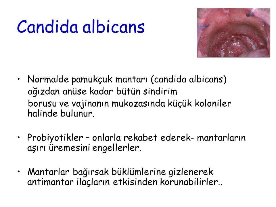 Candida albicans Normalde pamukçuk mantarı (candida albicans) ağızdan anüse kadar bütün sindirim borusu ve vajinanın mukozasında küçük koloniler halin