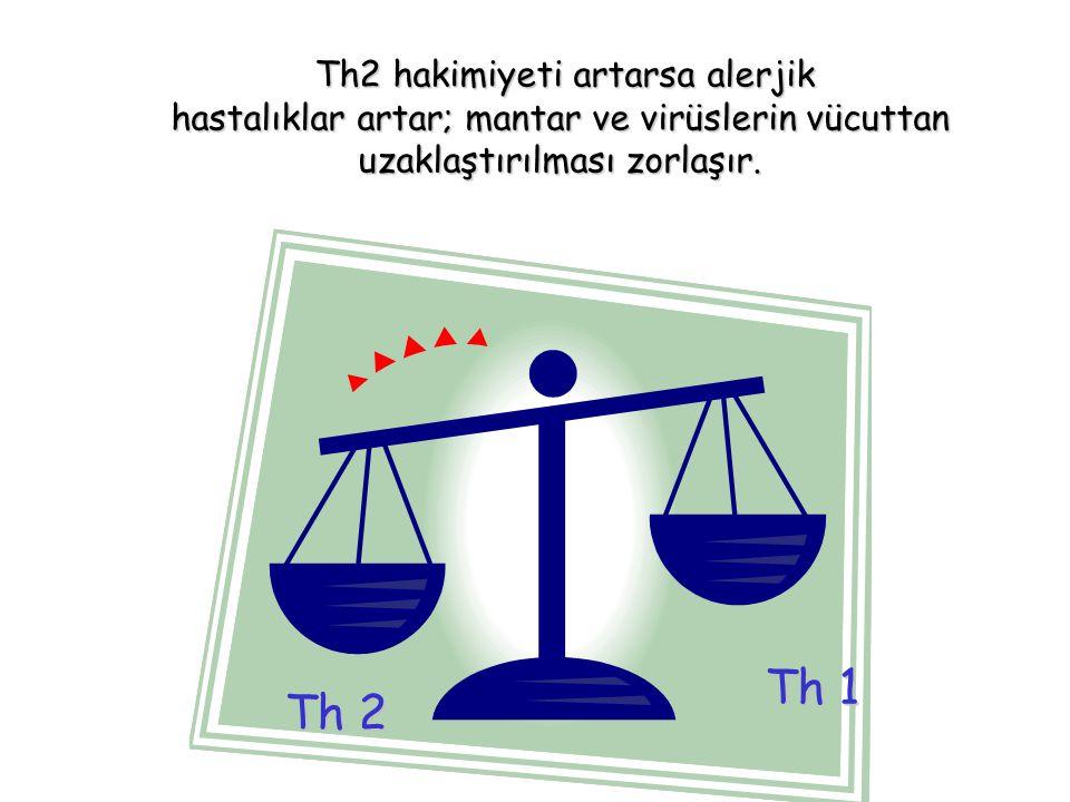 Th2 hakimiyeti artarsa alerjik Th2 hakimiyeti artarsa alerjik hastalıklar artar; mantar ve virüslerin vücuttan uzaklaştırılması zorlaşır. Th 2 Th 1