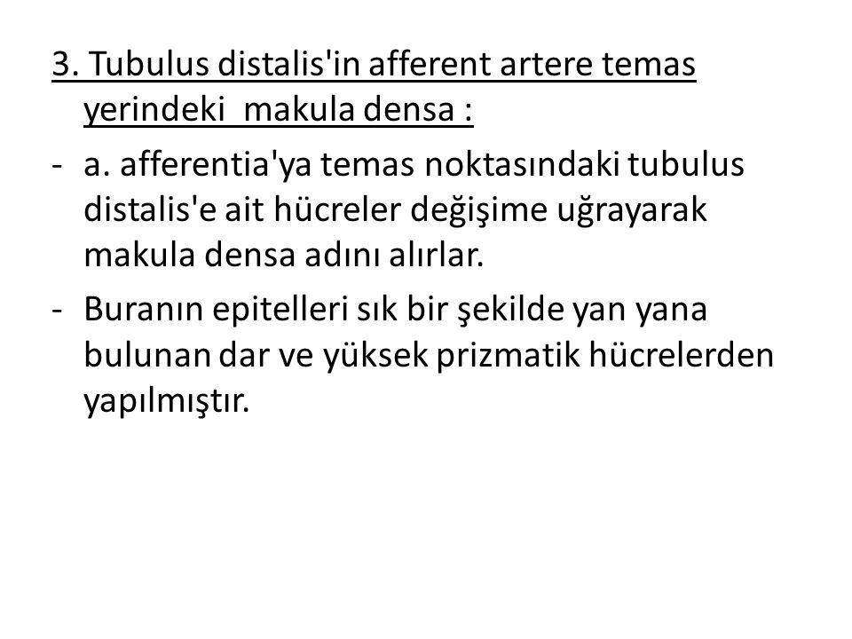 3. Tubulus distalis'in afferent artere temas yerindeki makula densa : -a. afferentia'ya temas noktasındaki tubulus distalis'e ait hücreler değişime uğ