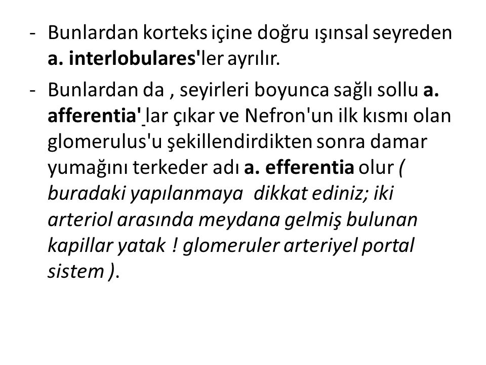 -Bunlardan korteks içine doğru ışınsal seyreden a. interlobulares'ler ayrılır. -Bunlardan da, seyirleri boyunca sağlı sollu a. afferentia' lar çıkar v