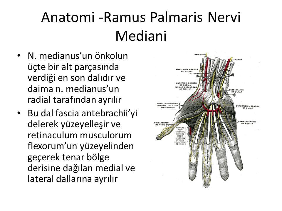 Anatomi -Ramus Palmaris Nervi Mediani N. medianus'un önkolun üçte bir alt parçasında verdiği en son dalıdır ve daima n. medianus'un radial tarafından