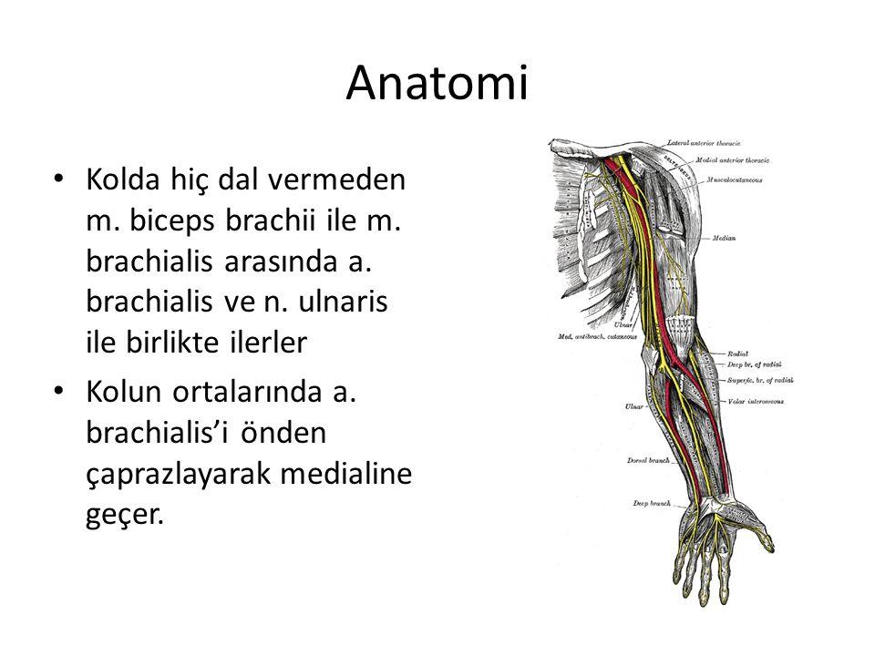 Anatomi Kolda hiç dal vermeden m. biceps brachii ile m. brachialis arasında a. brachialis ve n. ulnaris ile birlikte ilerler Kolun ortalarında a. brac