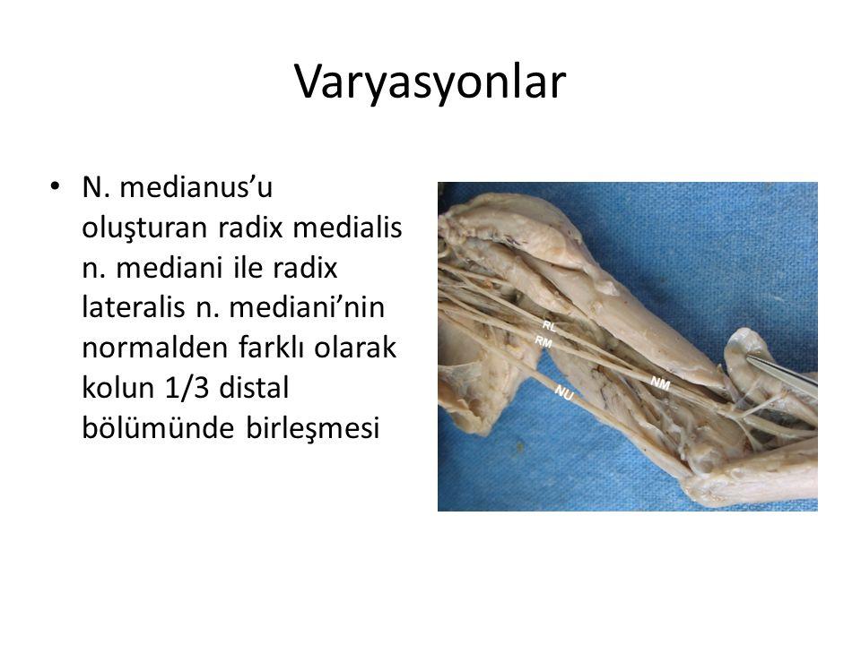 Varyasyonlar N. medianus'u oluşturan radix medialis n. mediani ile radix lateralis n. mediani'nin normalden farklı olarak kolun 1/3 distal bölümünde b