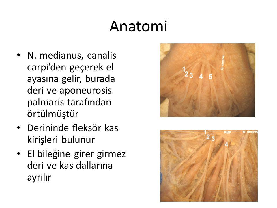 Anatomi N. medianus, canalis carpi'den geçerek el ayasına gelir, burada deri ve aponeurosis palmaris tarafından örtülmüştür Derininde fleksör kas kiri