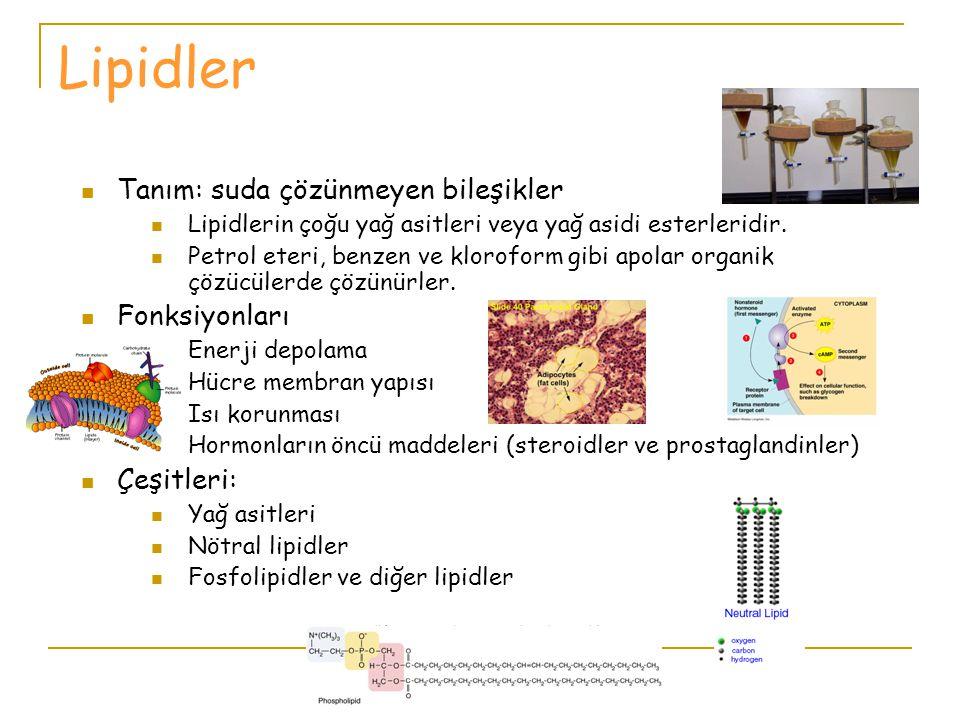 BESİN ÖĞELERİ 1.Proteinler 2.Yağlar (Lipidler) 3.Karbonhidratlar 4.Mineraller 5.Vitaminler 6.Su