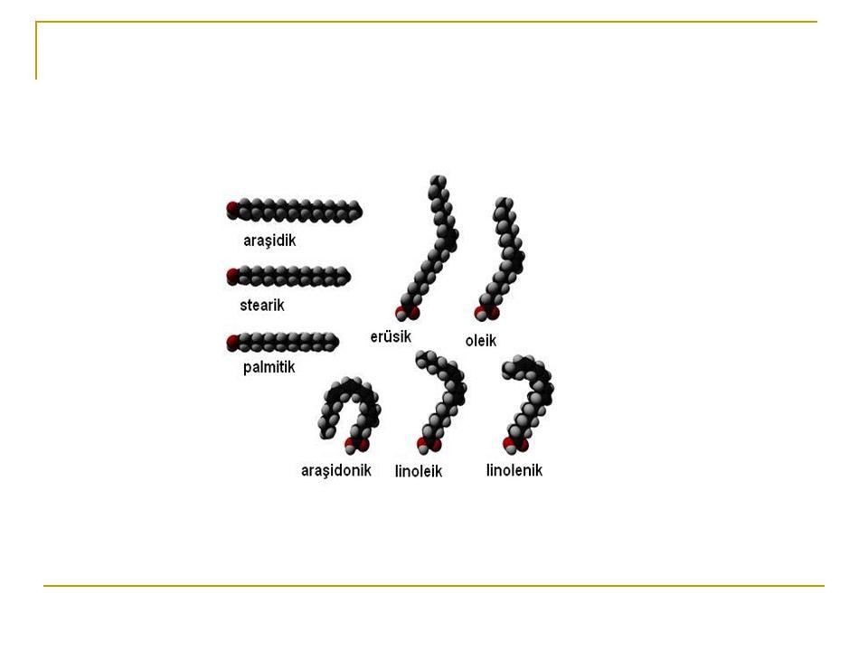 Numerik SembolİsimKimyasal Yapı 14:0Miristik asitCH 3 (CH 2 ) 12 COOH 16:0Palmitik asitCH 3 (CH 2 ) 14 COOH 16:1  9 Palmitoleik asitCH 3 (CH 2 ) 5 C=C(CH 2 ) 7 COOH 18:0Stearik asitCH 3 (CH 2 ) 16 COOH 18:1  9 Oleik asitCH 3 (CH 2 ) 7 C=C(CH 2 ) 7 COOH 18:2  9,12 Linoleik asitCH 3 (CH 2 ) 4 C=CCH 2 C=C(CH 2 ) 7 COOH 18:3  9,12,15 Linolenik asitCH 3 CH 2 C=CCH 2 C=CCH 2 C=C(CH 2 ) 7 COOH 20:4  5,8,11,14 Araşidonik asitCH 3 (CH 2 ) 3 (CH 2 C=C) 4 (CH 2 ) 3 COOH