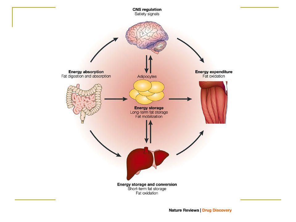 Lipidler Tanım: suda çözünmeyen bileşikler Lipidlerin çoğu yağ asitleri veya yağ asidi esterleridir.