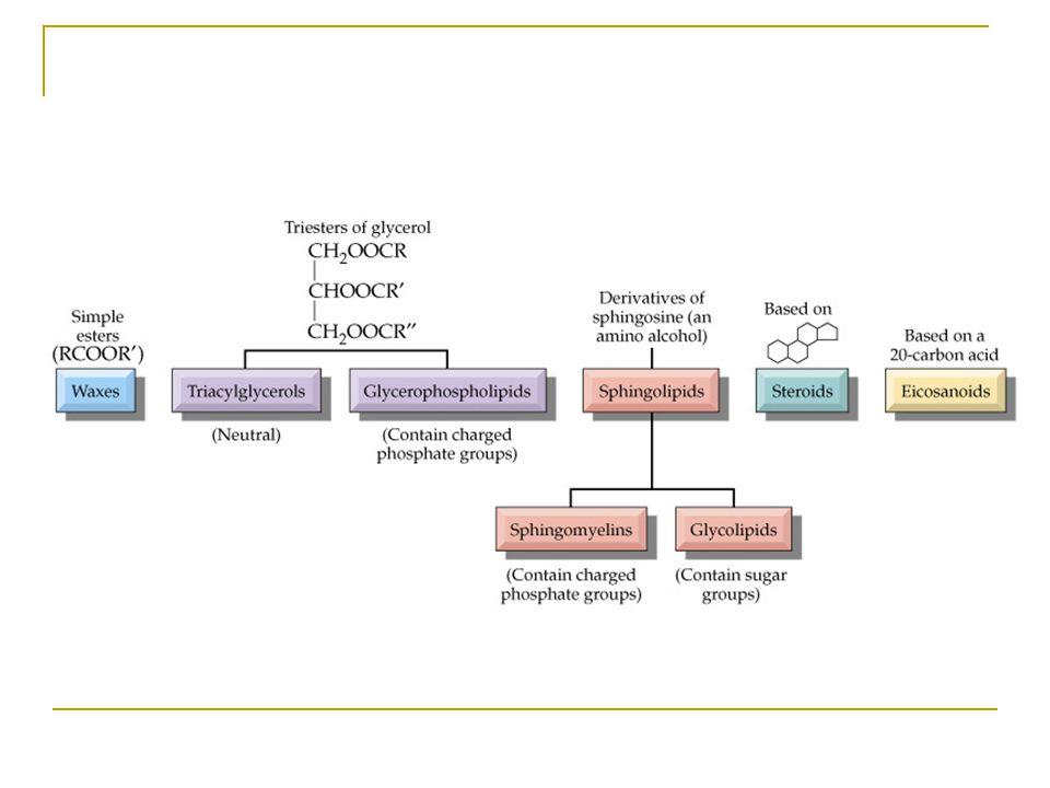 Lipidlerin sınıflandırılmaları