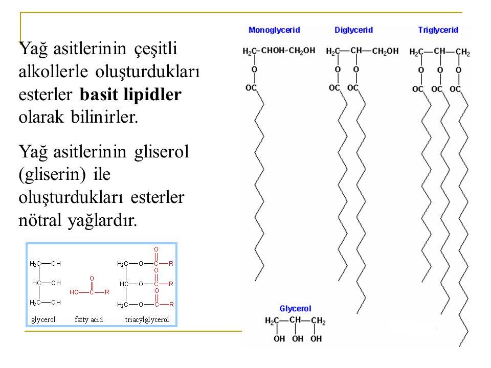 Lipidler Trigliserid Gliserol3 Yağ asidi Fosfolipid Gliserol>1 Yağ asidiP-içeren grup Sterol Lipidlerin Sınıflandırılması