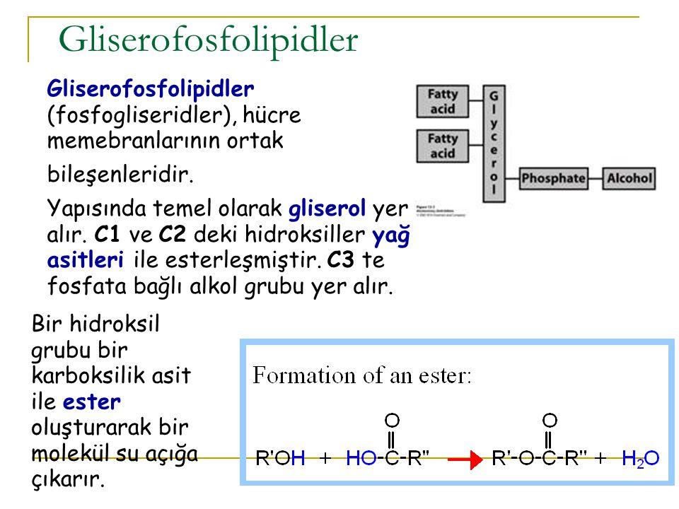 Bileşik Lipidler 1.Fosfolipidler 1. Gliserofosfolipidler 2.
