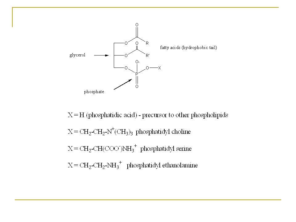Fosfolipidler Hücre zarının ana bileşenleri  fosfogliseridler Fosfolipidler genel olarak yağ asitleri, azotlu bir baz, fosforik asit ve gliserol, inositol veya sfingosinden birini içerirler.