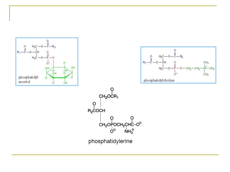 Çoğu gliserofosfolipidlerde (fosfogliseridler), P i, OH grubu ile esterleşmiştir.