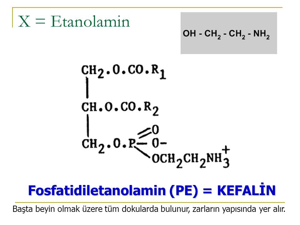 phosphatidylerine