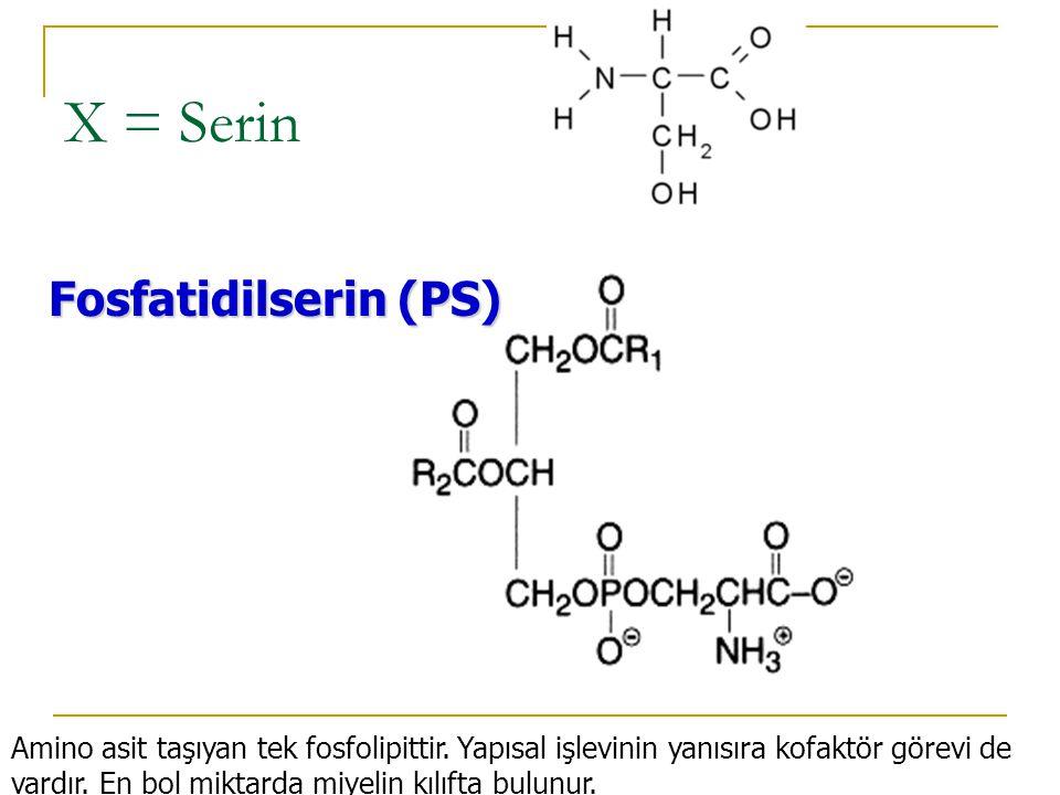 X = Kolin Fosfatidilkolin (PC) = LESİTİN Protoplazmanın en önemli maddelerindendir.