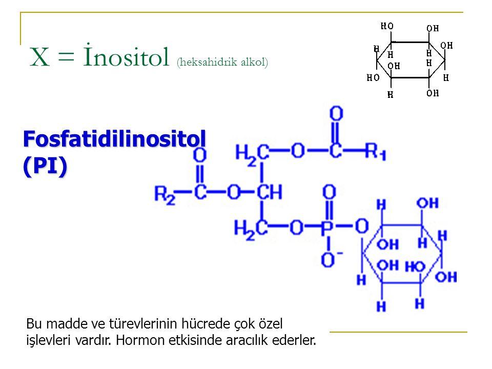X = Serin Fosfatidilserin (PS) Amino asit taşıyan tek fosfolipittir.