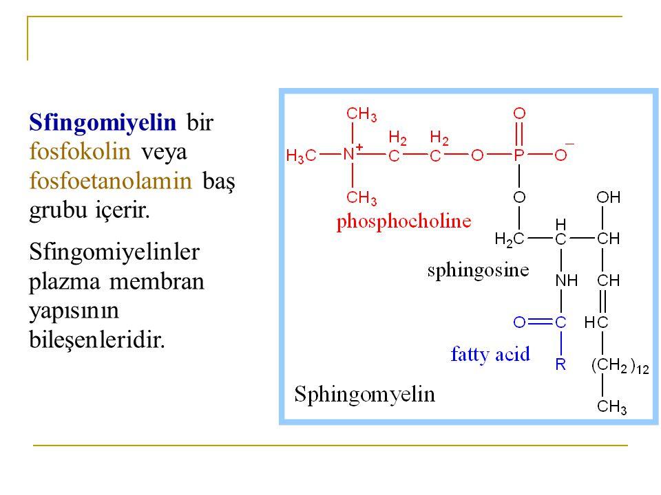 Daha kompleks sfingolipidlerde, polar baş grup seramidin sfingosin biriminde terminal hidroksil grubuyla esterleşmiştir.