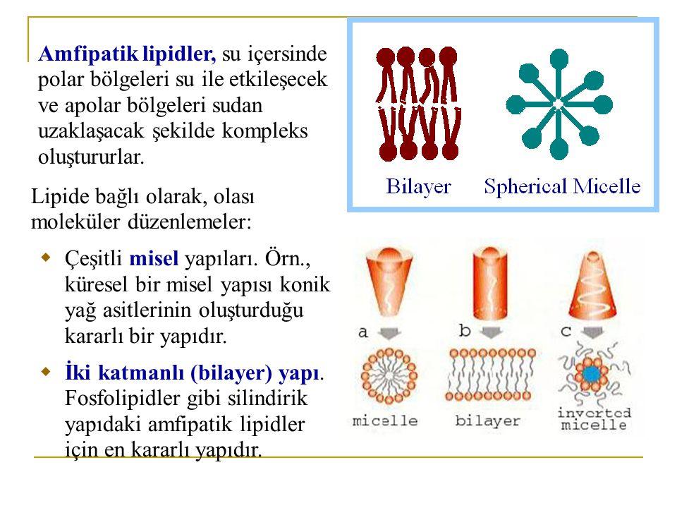 kompleks oligosakkarid içeren seramiddir.