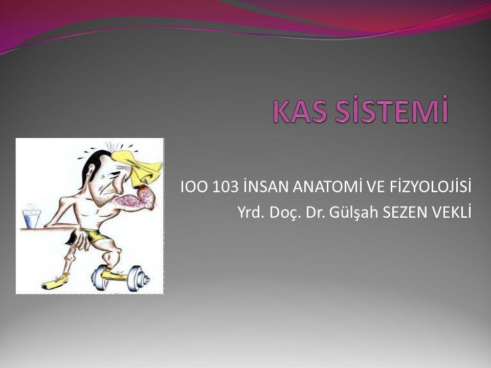 IOO 103 İNSAN ANATOMİ VE FİZYOLOJİSİ Yrd. Doç. Dr. Gülşah SEZEN VEKLİ