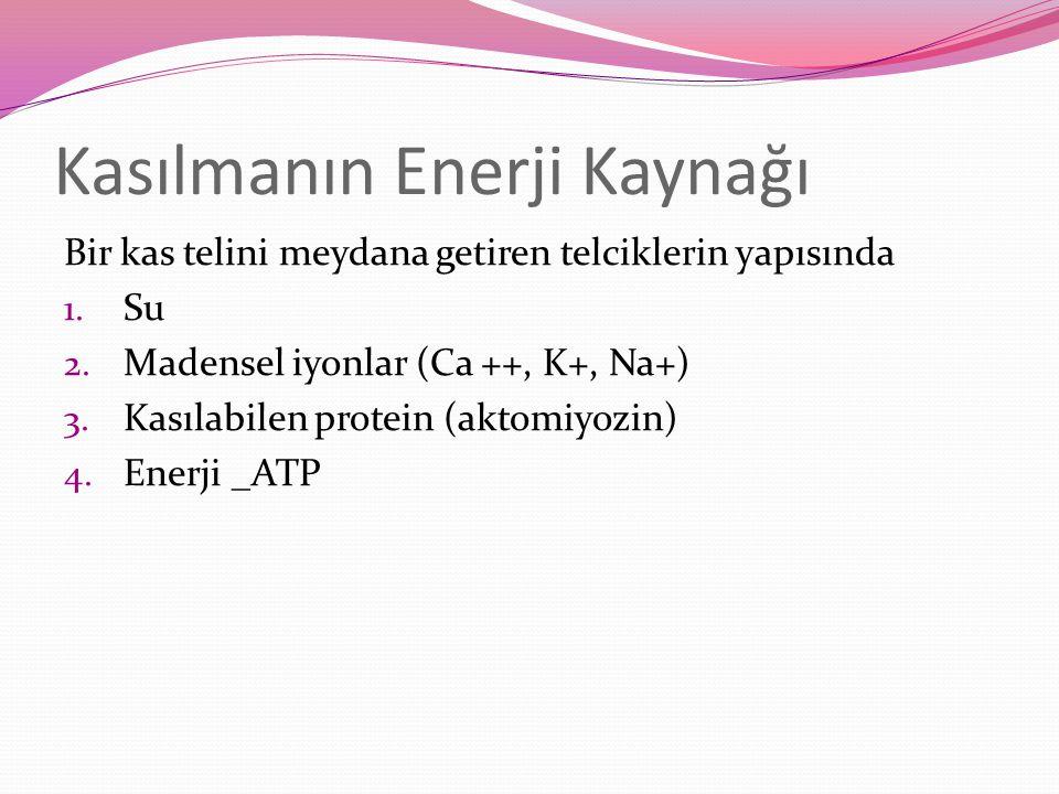 Kasılmanın Enerji Kaynağı Bir kas telini meydana getiren telciklerin yapısında 1. Su 2. Madensel iyonlar (Ca ++, K+, Na+) 3. Kasılabilen protein (akto