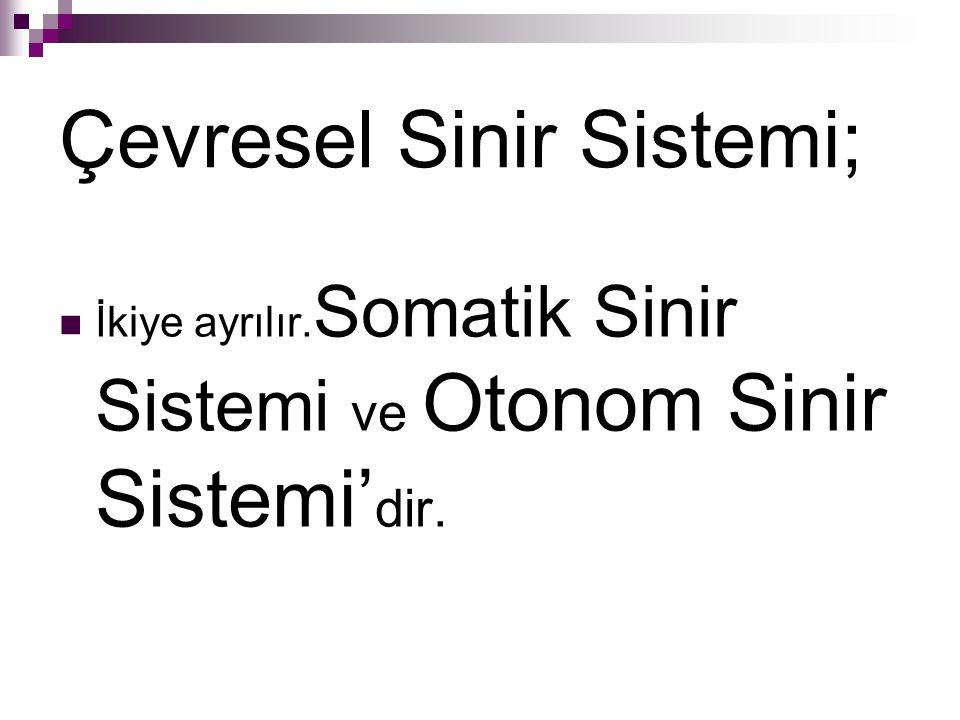 Çevresel Sinir Sistemi; İkiye ayrılır. Somatik Sinir Sistemi ve Otonom Sinir Sistemi' dir.