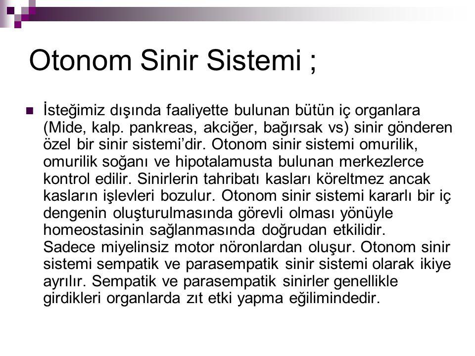 Otonom Sinir Sistemi ; İsteğimiz dışında faaliyette bulunan bütün iç organlara (Mide, kalp.
