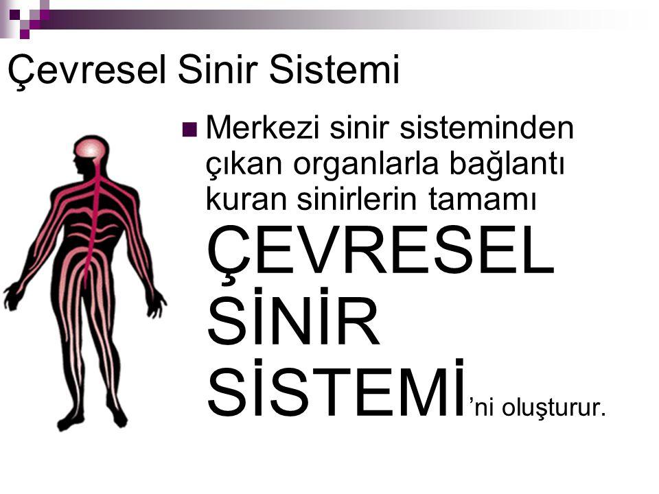Merkezi sinir sisteminden çıkan organlarla bağlantı kuran sinirlerin tamamı ÇEVRESEL SİNİR SİSTEMİ 'ni oluşturur.