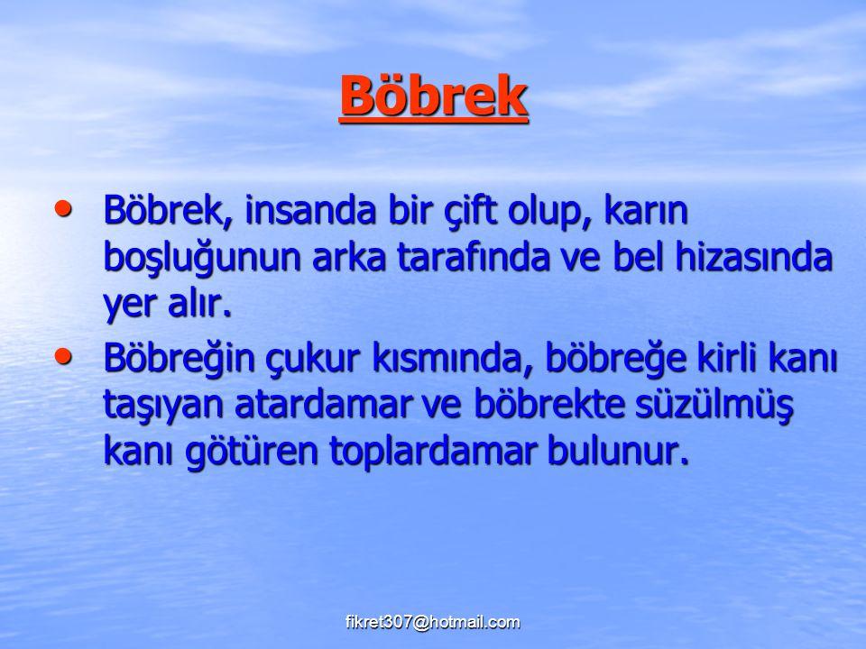 Böbrek Böbrek, insanda bir çift olup, karın boşluğunun arka tarafında ve bel hizasında yer alır. Böbrek, insanda bir çift olup, karın boşluğunun arka