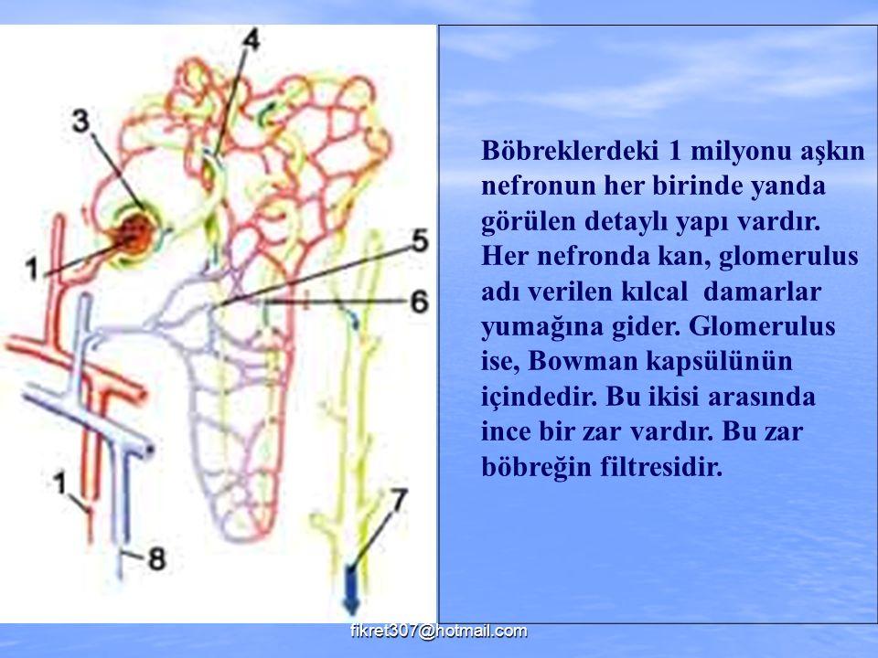 fikret307@hotmail.com Böbreklerdeki 1 milyonu aşkın nefronun her birinde yanda görülen detaylı yapı vardır. Her nefronda kan, glomerulus adı verilen k