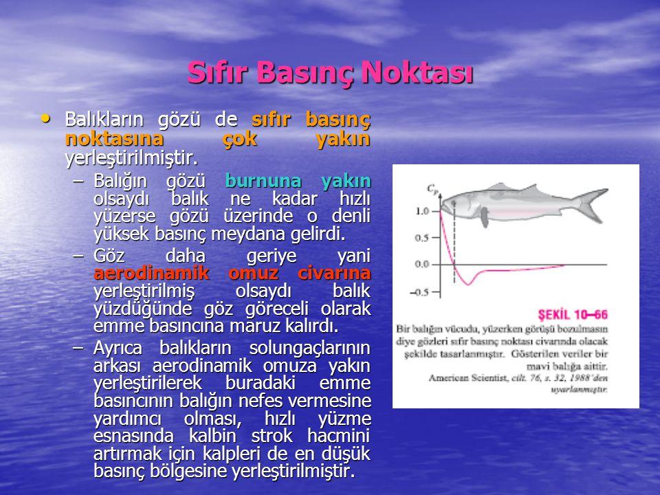 Sıfır Basınç Noktası Balıkların gözü de sıfır basınç noktasına çok yakın yerleştirilmiştir. Balıkların gözü de sıfır basınç noktasına çok yakın yerleş