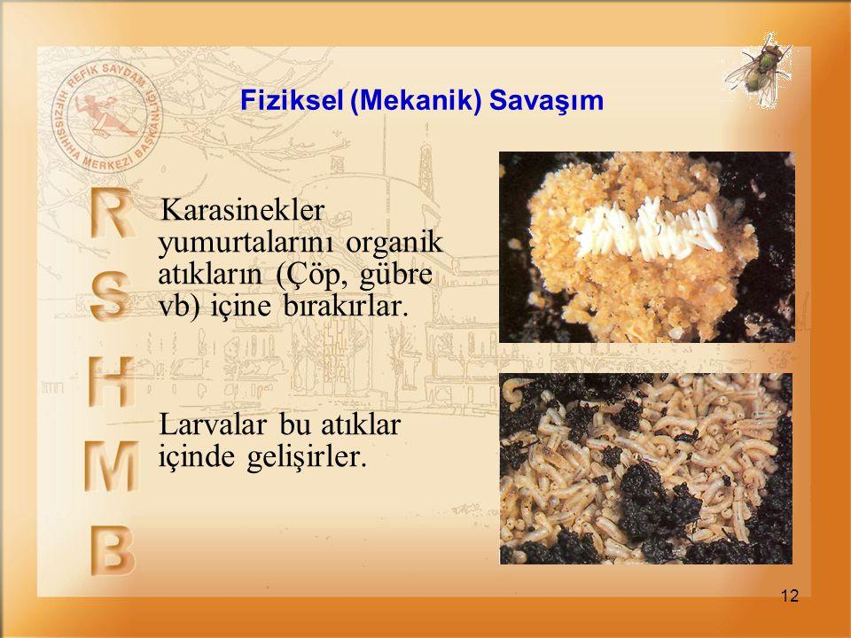 12 Karasinekler yumurtalarını organik atıkların (Çöp, gübre vb) içine bırakırlar. Larvalar bu atıklar içinde gelişirler. Fiziksel (Mekanik) Savaşım