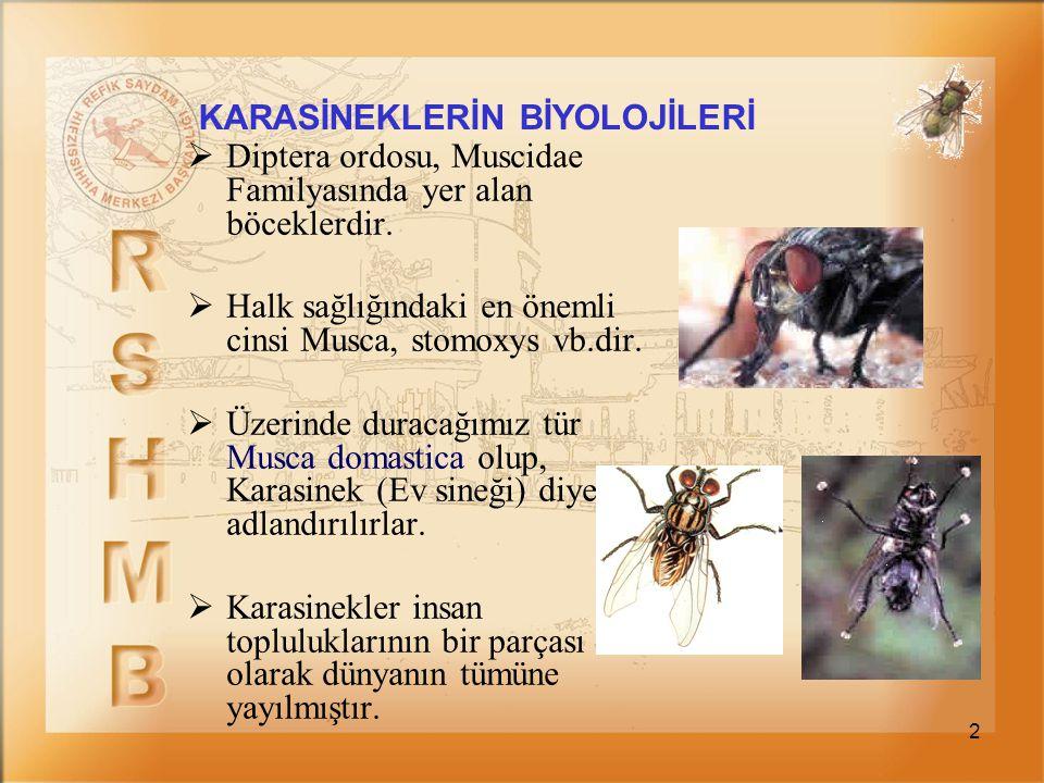 2 KARASİNEKLERİN BİYOLOJİLERİ  Diptera ordosu, Muscidae Familyasında yer alan böceklerdir.  Halk sağlığındaki en önemli cinsi Musca, stomoxys vb.dir