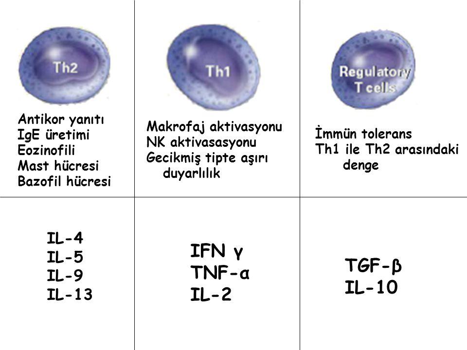 IFN γ TNF-α IL-2 IL-4 IL-5 IL-9 IL-13 TGF-β IL-10 İmmün tolerans Th1 ile Th2 arasındaki denge Makrofaj aktivasyonu NK aktivasasyonu Gecikmiş tipte aşırı duyarlılık Antikor yanıtı IgE üretimi Eozinofili Mast hücresi Bazofil hücresi