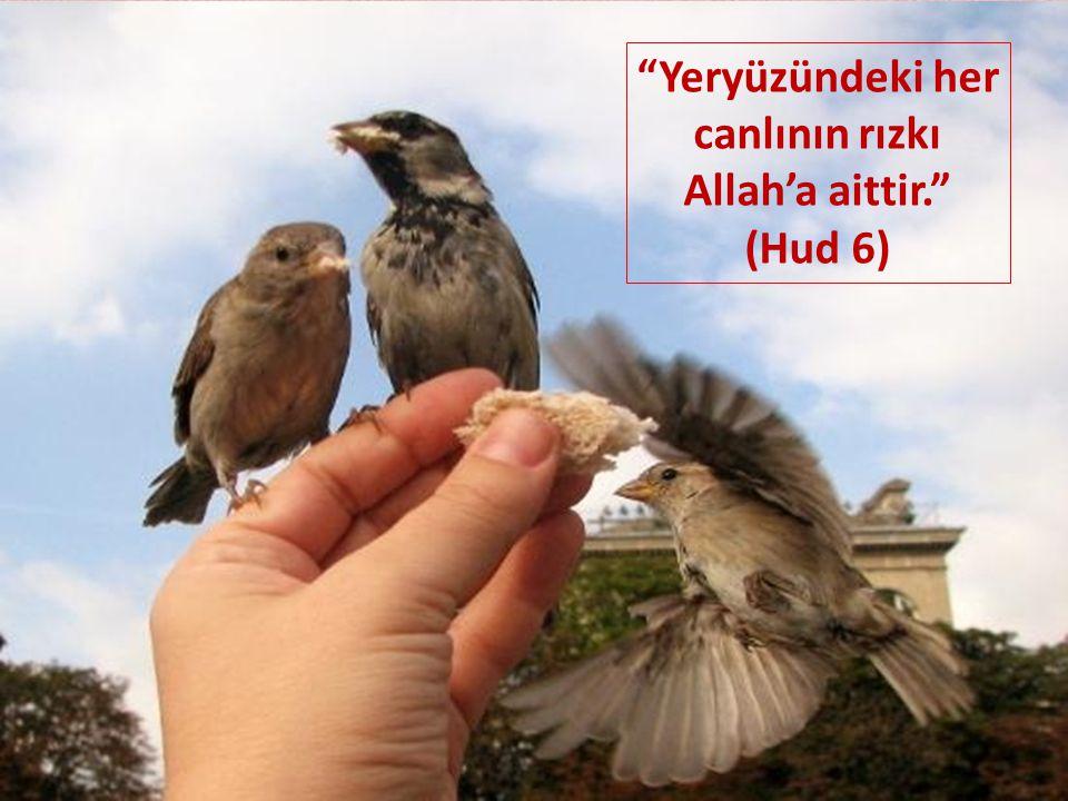 Yeryüzündeki her canlının rızkı Allah'a aittir. (Hud 6)
