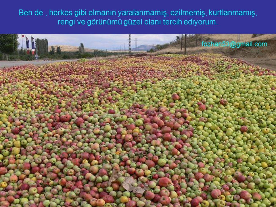 Ben de, herkes gibi elmanın yaralanmamış, ezilmemiş, kurtlanmamış, rengi ve görünümü güzel olanı tercih ediyorum. fozhan53@gmail.com