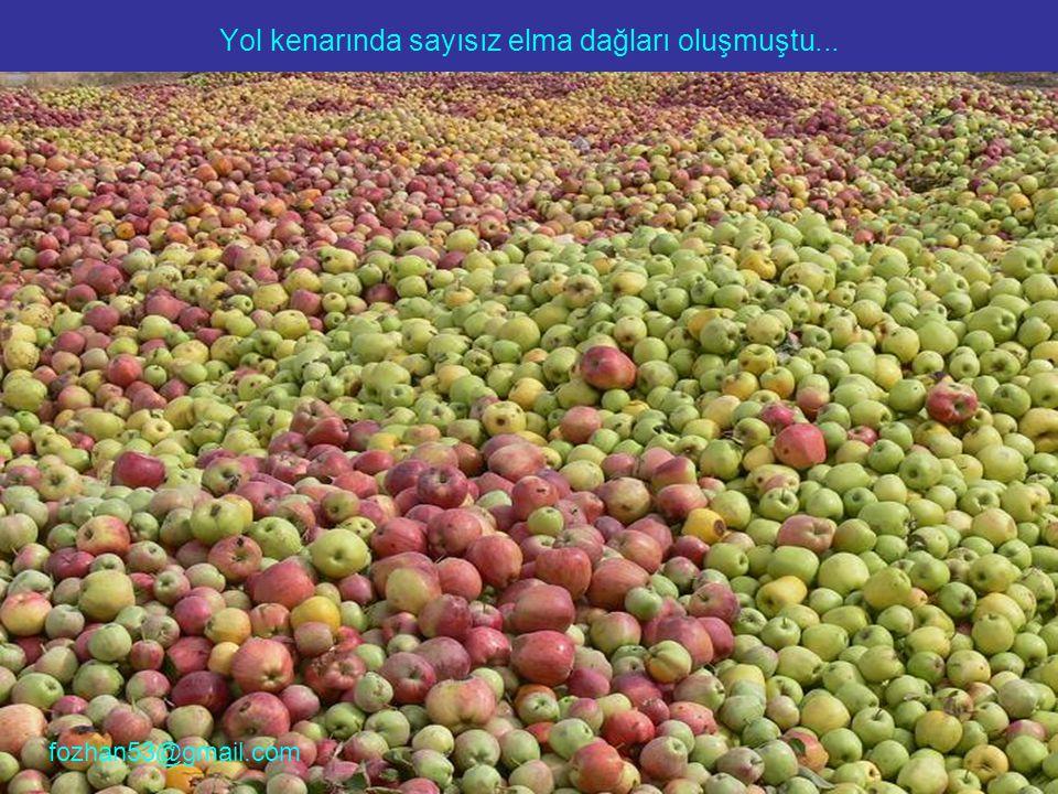 Yol kenarında sayısız elma dağları oluşmuştu... fozhan53@gmail.com