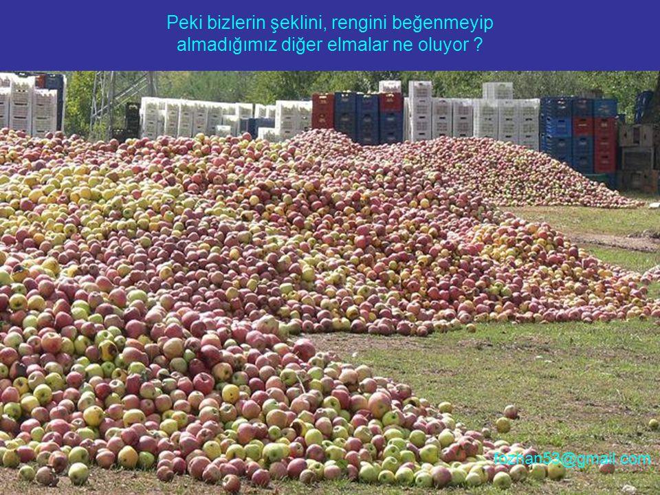 Peki bizlerin şeklini, rengini beğenmeyip almadığımız diğer elmalar ne oluyor ? fozhan53@gmail.com